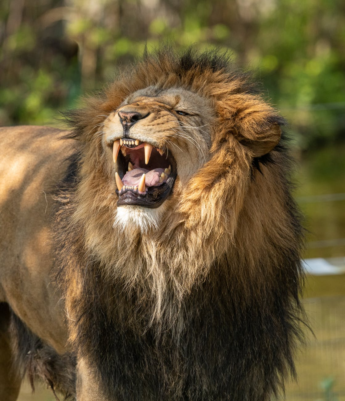 What if God Never Shut the Lions' Mouths?
